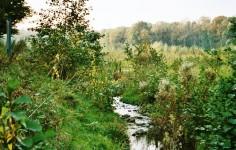 Oekologisch Verbesserter Nebenlauf Landwehrbach